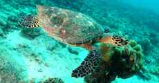 Seychelles-image-3.jpg