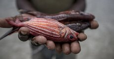 Fish Hands © WWF-US James Morgan (1).jpg