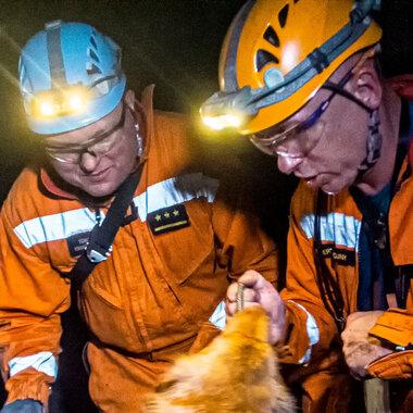 Psy – ratownicy w kopalniach KGHM