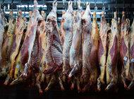 Apetyt na samozagładę: jak zjadanie zwierząt zabija naszą planetę?
