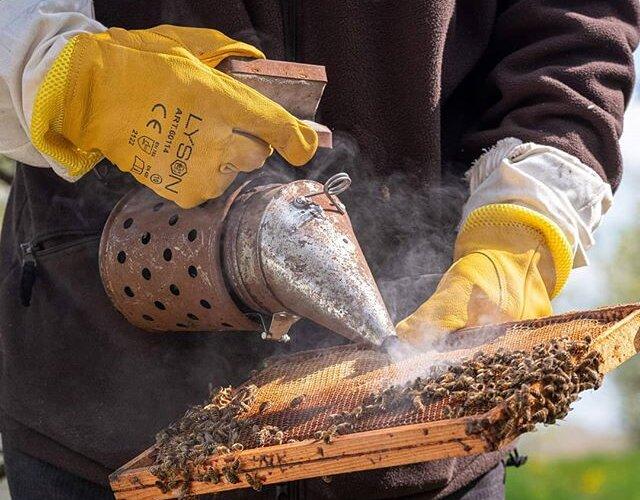 """@bartlomiej.topa.official: """"Obecność pszczół jest kluczowa dla plonów i dla tego, by drzewa rodziły owoce."""" Tym razem #ElektrycznaHybryda zaprowadziła #EkoTropyBartkaTopy do świata pszczół 🐝 _____________ 📸 @pporecki 🚙⚡️ #OutlanderPHEV"""