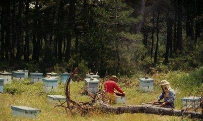 Wilki i niedźwiedzie im niestraszne – ogrodzenia elektryczne chronią gospodarstwa i pasieki