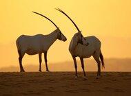 Rezerwat Dubai Desert Conservation publikuje pierwszy raport roczny