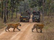 Turysto wróć! Ochrona ginących gatunków w czasie COVID-19.