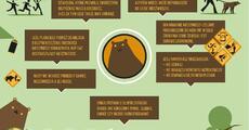 WWF_infografika_niedźwiedź.pdf