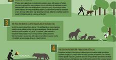 WWF_infografika_wilk.pdf
