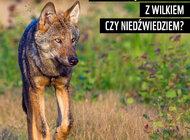 Jak uniknąć spotkania z wilkiem czy niedźwiedziem?