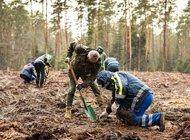 """""""Sadzimy kolejne pokolenie lasu"""" - akcja wolontariuszy Grupy Enea w lasach Nadleśnictwa Staszów"""