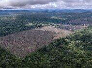 Unia Europejska i Chiny największymi niszczycielami lasów deszczowych. Wśród państw UE Polska zajmuje 8 miejsce.