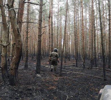 Lasy pod kontrolą