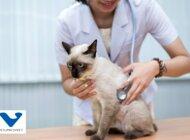 Branża leków dla zwierząt chce mówić głośniej o zdrowiu