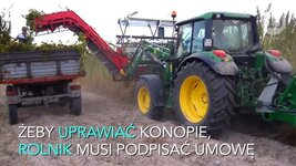 Rynek konopi w Polsce kwitnie. Cały czas wzrasta ich zastosowanie