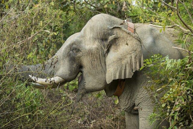 slon obroza.JPG