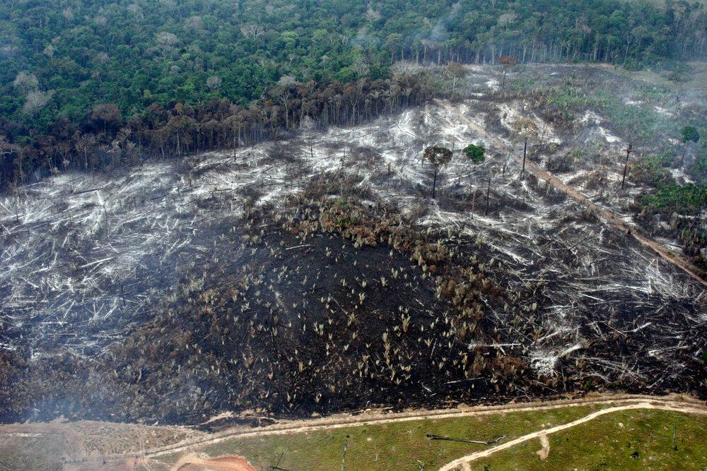 WWF_Deforestacja_w_Bom_Futuro_Brazylia.jpg