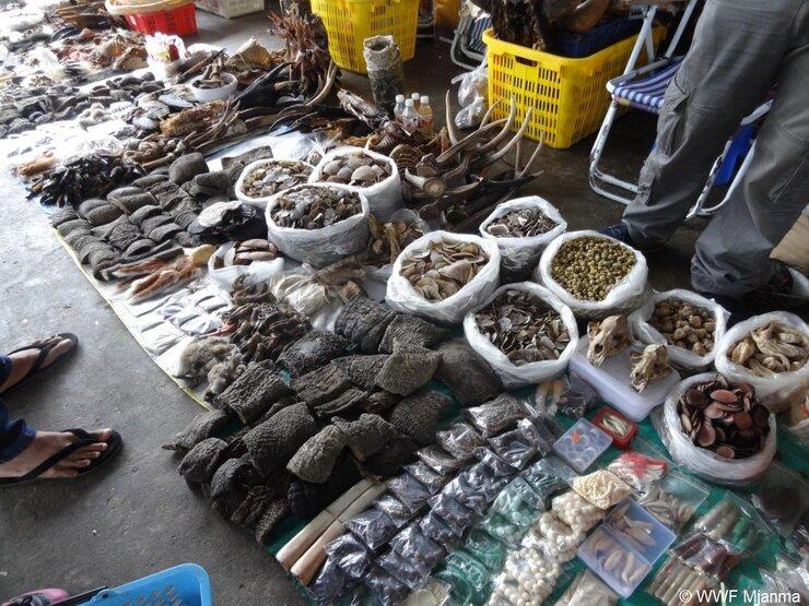 Illegal trade © WWF Mjanma (1)