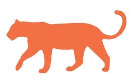 tygrys1.jpg
