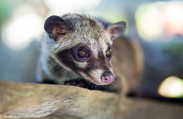 © Shutterstock  trubvin  WWF