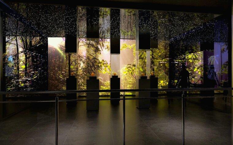 Las bursztynowy w nowym Muzeum Bursztynu, aut. Anna Bocek, mat. Muzeum Gdańska.jpg preview