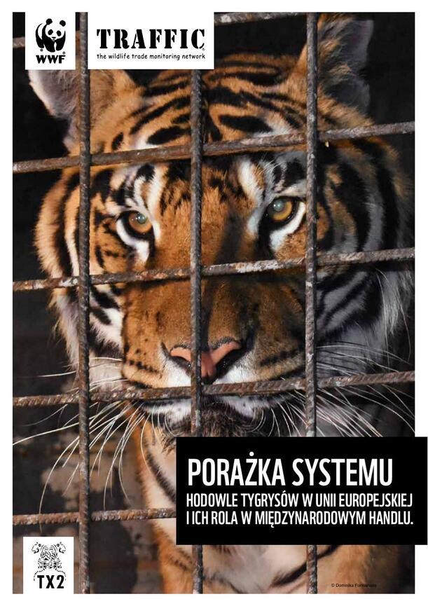PORAZKA_SYSTEMU_TYGRYS_RAPORT_SHORT_WWF_PL.pdf