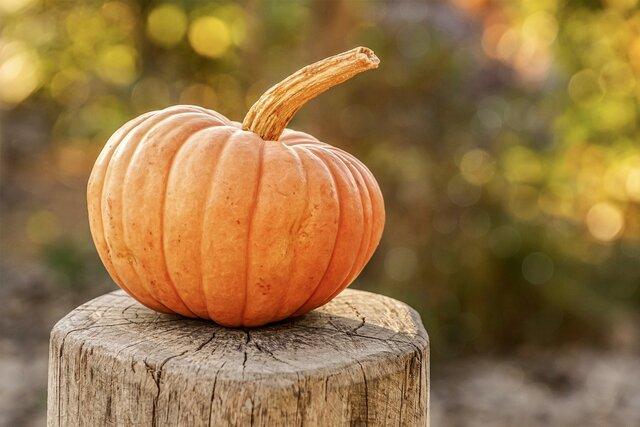 pumpkin-4454745_1920.jpg