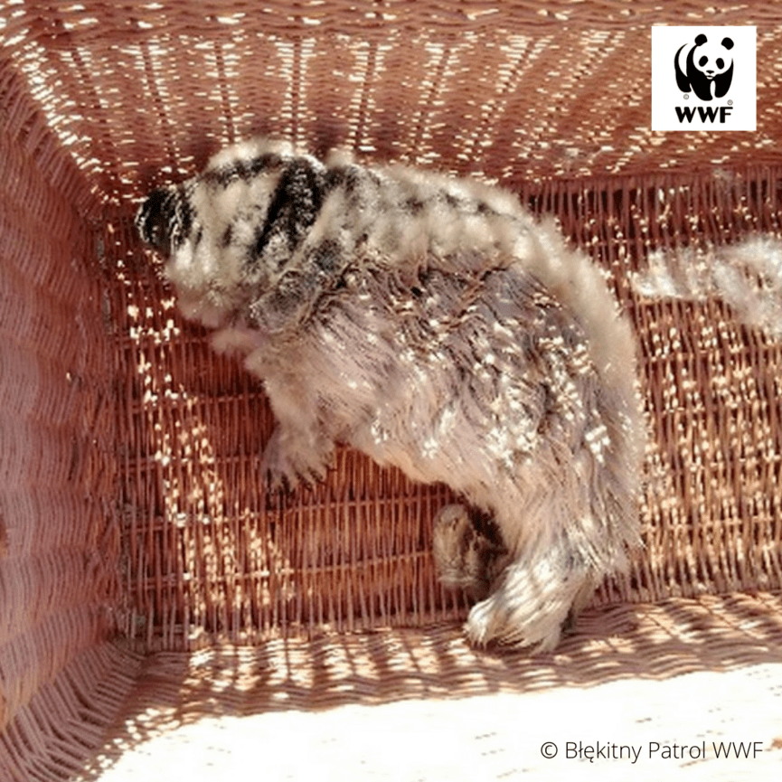 © Błekitny Patrol WWF (7)