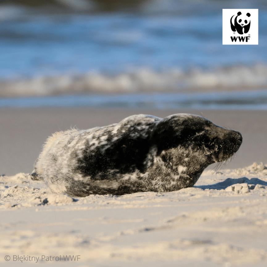 © Błekitny Patrol WWF (3)