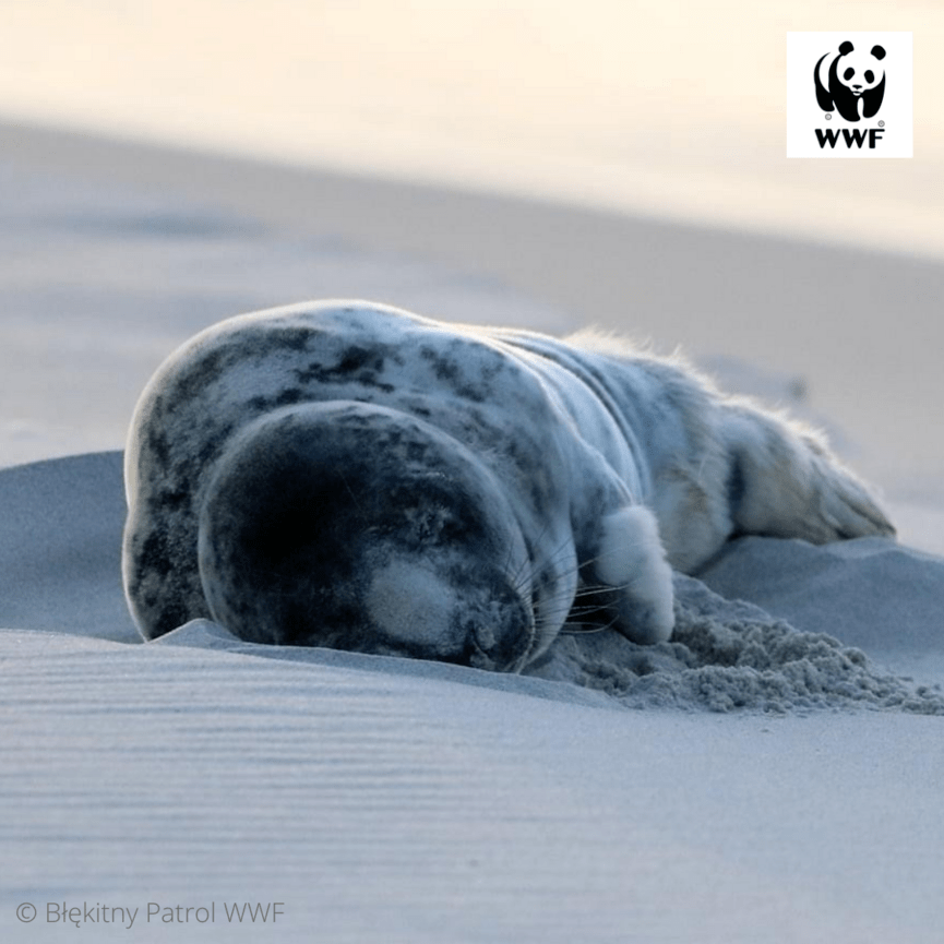 © Błekitny Patrol WWF (4)