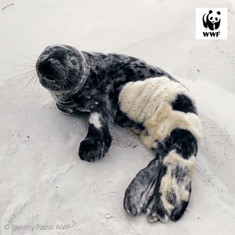 © Błekitny Patrol WWF (5)