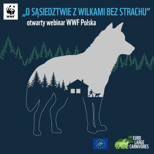 WWF Polska wilk