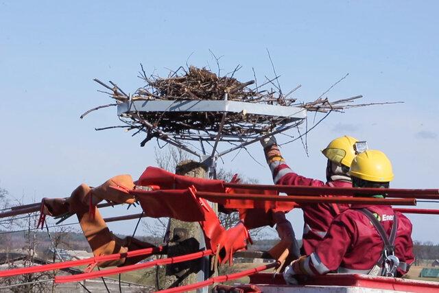 1. Montaż platformy pod bocianie gniazdo