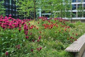 Ogrodowania Browary