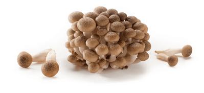 grzyby shimeji brązowe.png