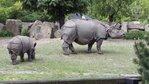 Zoo ostoją dla zagrożonych gatunków