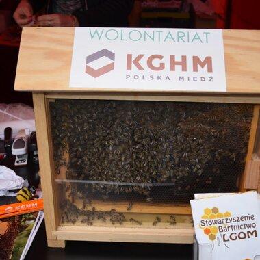 Wolontariat KGHM - ekologia i pszczoły