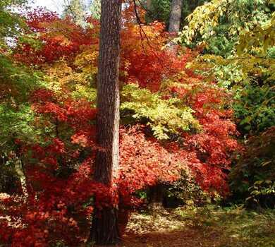 Jesień ma wiele barw - Arboretum w Rogowie