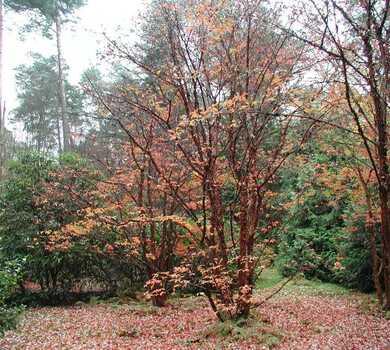 Las mieszany-Arboretum w Rogowie