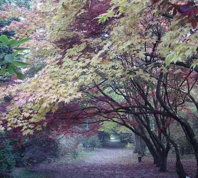 Nadchodzi jesień - Arboretum w Rogowie
