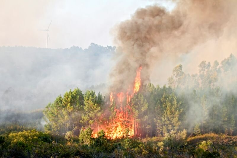 2407 Pożary-wysypisk-lasów-wypalanie-traw-–-jak-ochronić-zabudowania-przed-trawiącym-żywiołem