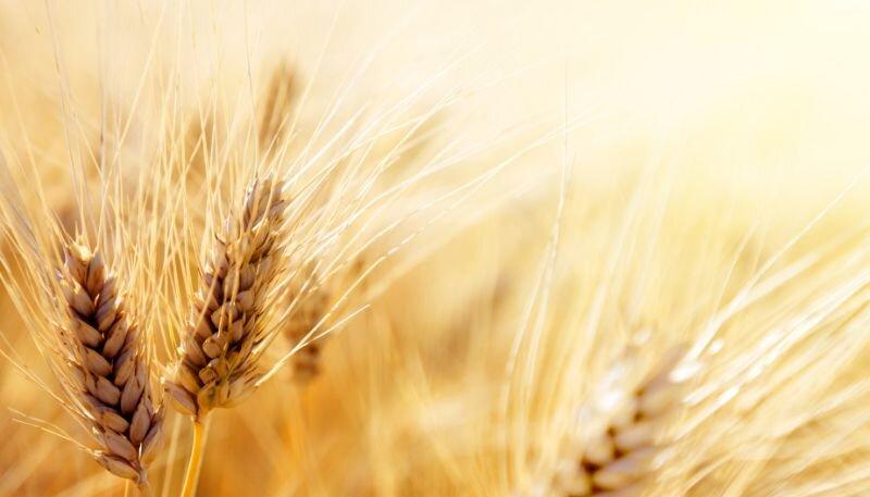 Nowe-realia-uprawowe-to-nowe-możliwości-dla-rolników