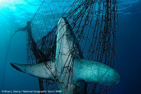 rekin-w-sieci