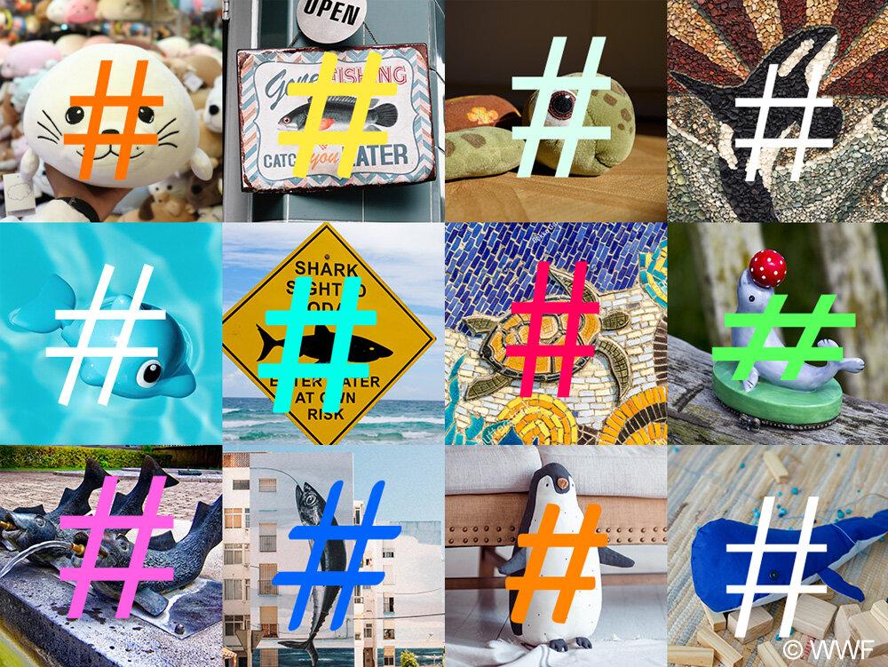 galeria-hashtagi