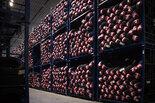 OPONEO.PL: 51% wzrost sprzedaży opon w I kwartale 2017