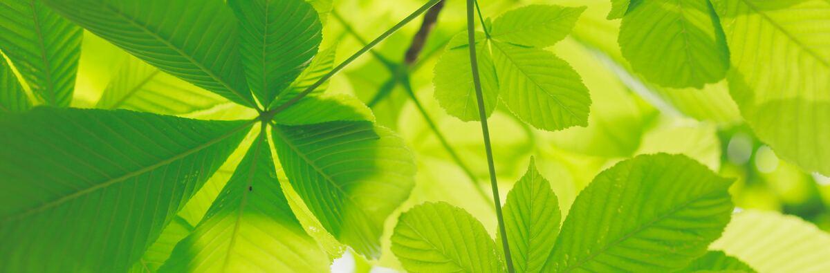 kumiko-shimizu-672694-unsplash.jpg