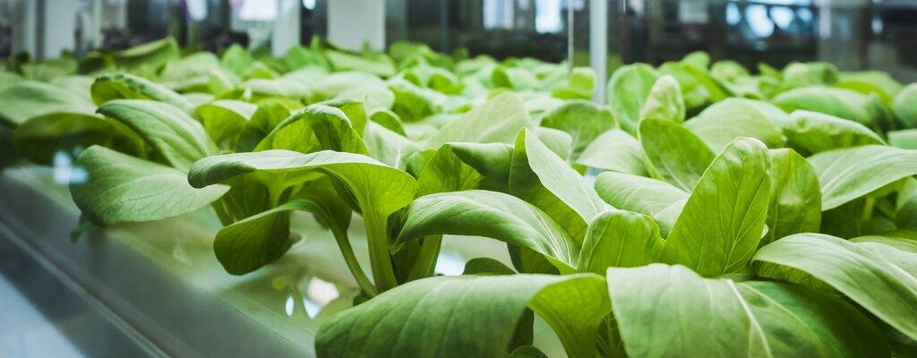 Sygnał z serca rośliny