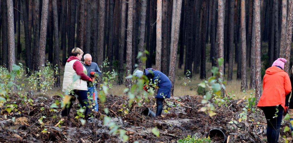 Poczta Polska i Lasy Państwowe wspólnie dla środowiska
