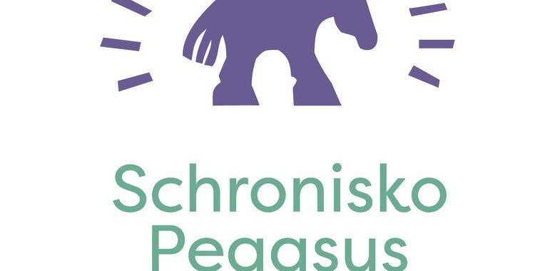 Provident adoptuje konia ze schroniska Pegasus. Ruszyła kampania To nie KONIEc
