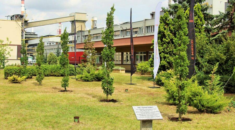 Huta Miedzi Głogów świętuje 50-lecie - przy oddziale KGHM Polska Miedź S.A. posadzono 5 dębów
