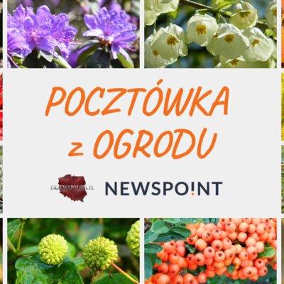 Pocztówka z ogrodu od Newspoint